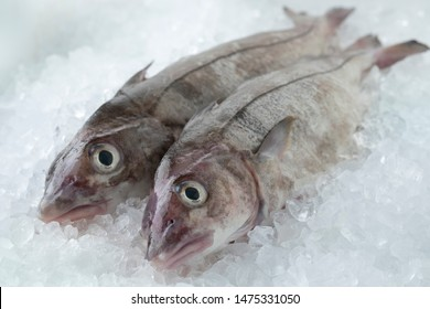 Fresh raw whole haddock fish on ice in the shop
