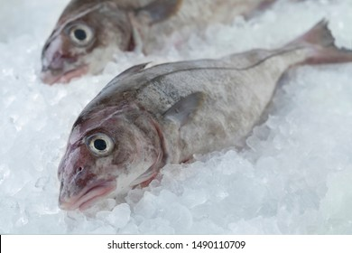 Fresh raw whole haddock fish cooled on ice
