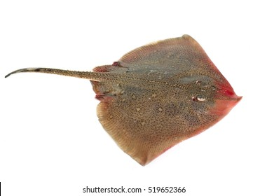 fresh ray in front of white background