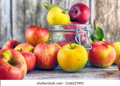 Fresh, real apples from organic farming, ecological harvest on wood background.