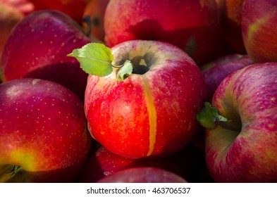 Fresh red apples on a market closeup