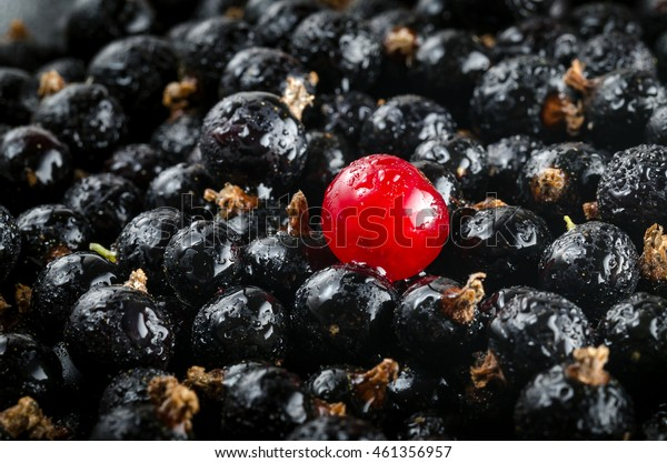 Fresh Red And Black Currant With Drops Of Water. Close-up. Angle View. Macro.