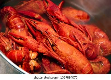 Fresh red boiled crawfish