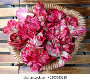 Fresh red chicory of the prized italian  type  known as rose of Gorizia, in a basket on a wooden table