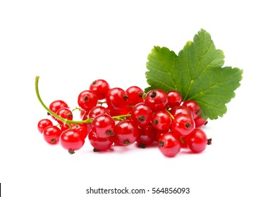 Fresh red currant isolated on white background