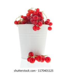Fresh red currents harvest in white bucket isolated in studio
