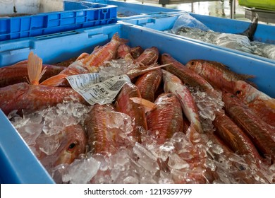 Fresh red fish (salmonete/striped red mullet/surmullet/mullus surmuletus) on ice in a blue box in the fish market in the port of Malpica, Galicia, Spain