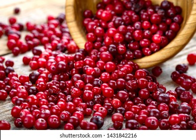 Fresh red forest cranberry in a round bowl. Autumn harvest of wild berries