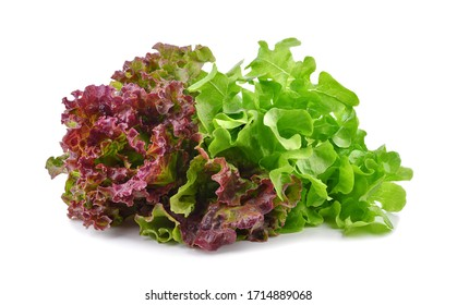 Fresh red and green lettuce isolated on white background.