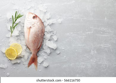 Fresh red Japanese seabream cooking on gray stone background, top view