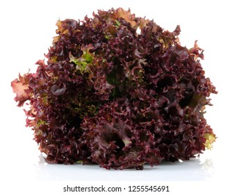 Fresh red lettuce isolated on white background