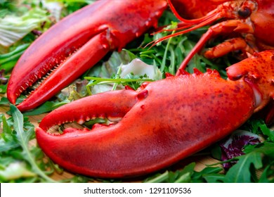 fresh red lobster claw on green
