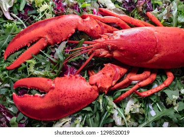 Fresh red lobster on green, close up