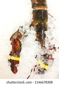 Fresh red lobster on ice freezing still alive seafood