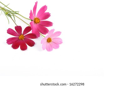 Fresh red and pink flowers lay on a white background.