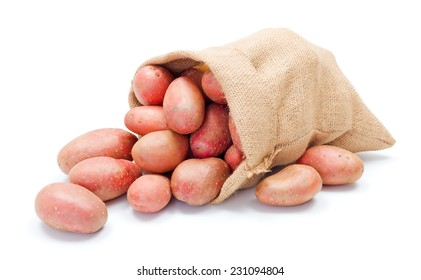 Fresh red potatoes crop spreading out from a burlap sack