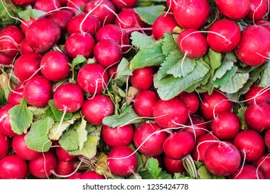 fresh red radish with green leaves on the counter of market
