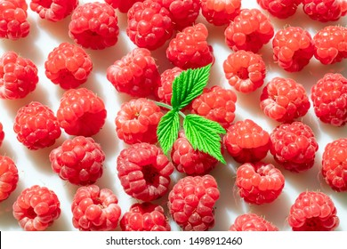 A lot of fresh red raspberries are scattered on a white surface. View from above