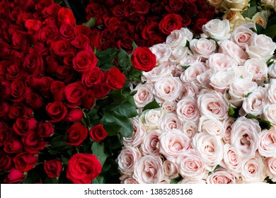 Fresh red roses and pink roses background. -image