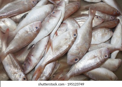 Fresh Red Snapper fish at seafood market