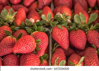 Fresh red strawberries arranged in baskets ready for sale at marketplace