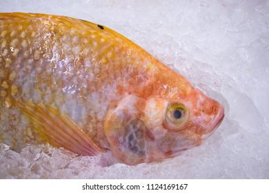 Fresh red tilapia on ice at market
