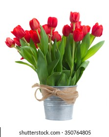 fresh red tulip flowers in metal bucket isolated on white background