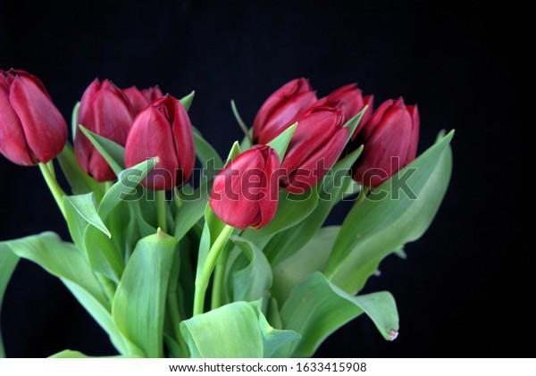 fresh red tulips in the flower vase