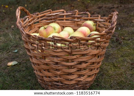 Fresh red and yellow apples in a basket