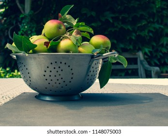 Fresh ripe apples in  in the metal mesh percolate pot on the table outdoor. Apple harvest with copy space. Ripe summer vegetables.