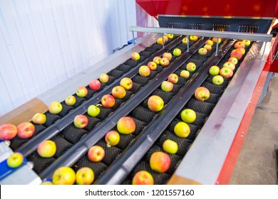 The fresh ripe apples rolling on the modern automatic robotic cleaning