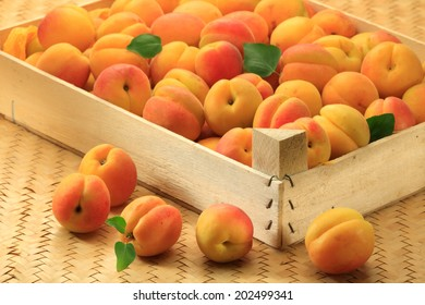 Fresh ripe apricots with leaves   in a wooden box