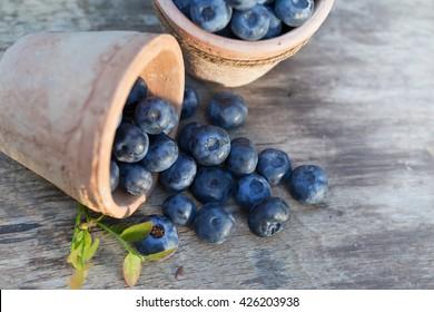 Fresh ripe Blueberries crop in garden