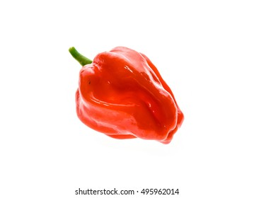 Fresh ripe Caribbean Red Habanero hot chili pepper with green stem. Isolated on white.