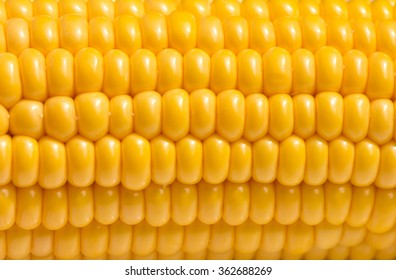 Fresh ripe corn texture. Agricultural vegetarian background.
