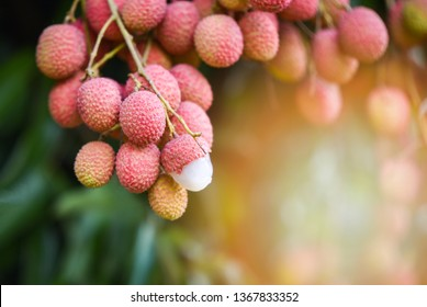 Thai Lychee Images, Stock Photos & Vectors | Shutterstock