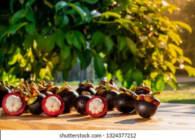 Fresh ripe mangosteen fruits on wooden table with mangosteen tree background