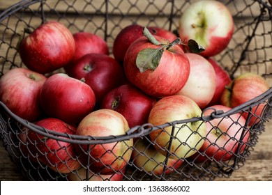 Fresh ripe red Apples with leaves in old metal basket