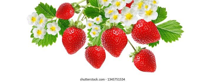 fresh ripe red strawberry