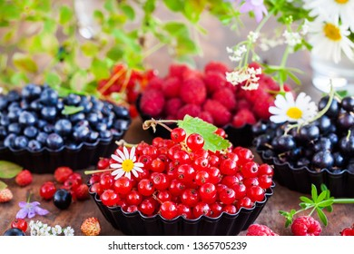 Fresh ripe summer berries - red currant in the foreground and black currant, blueberry, raspberry on background