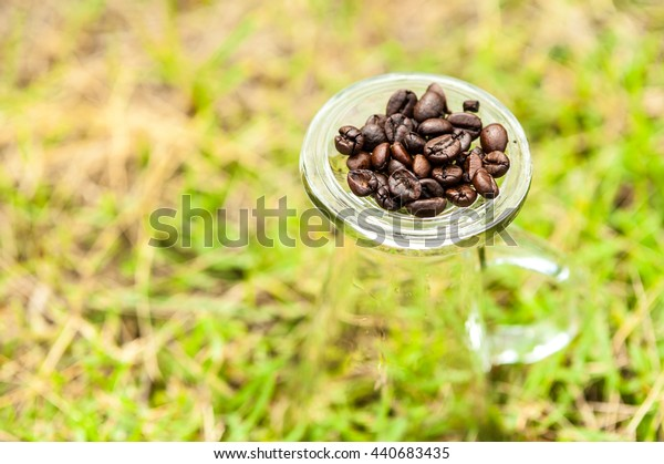 Fresh roasted coffee beans on a glass of water upside down on the lawn.