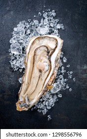 Fresh rock oyster offered as closeup opened on crushed ice with copy space