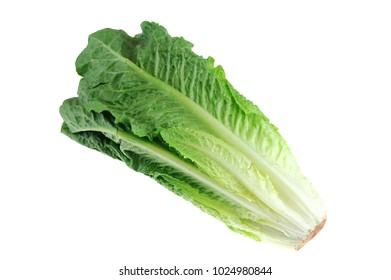 Fresh romaine lettuce isolated on white background