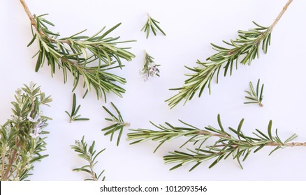 fresh rosemary herbs from the summer garden