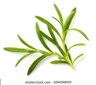 fresh rosemary isolated on white