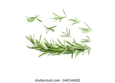 Fresh Rosemary isolated on white background