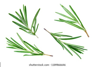 Fresh Rosemary leaves isolated. toning. selective focus