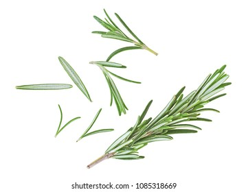 Fresh rosemary on a white background