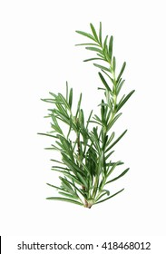 fresh rosemary sprig isolated on white background