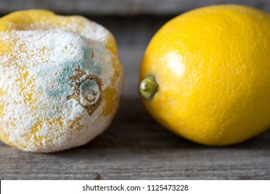 Fresh and rotten lemon. fruit with mold on wooden background